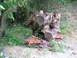 2003年6月5日 欅テーブル制作風景